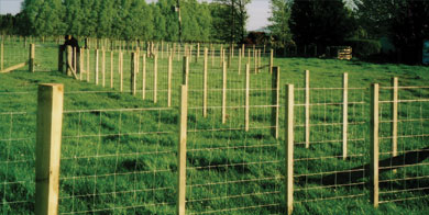 Post and Netting Fence